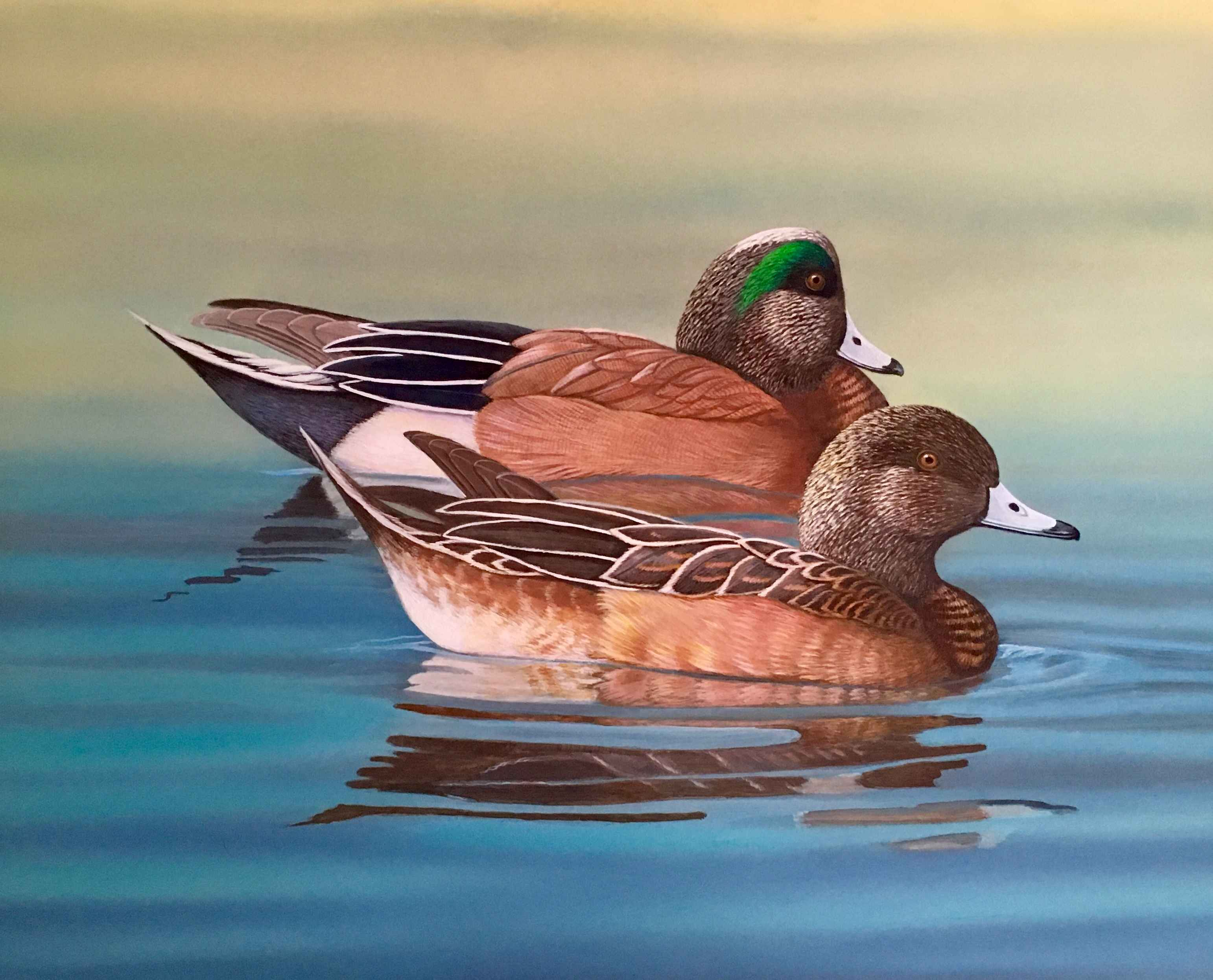 2019 Oregon Waterfowl Stamp Winner - 2nd Place